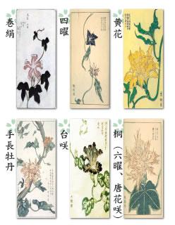 変化アサガオの歴史 アサガオは、奈良時代頃に薬草として中国から渡来したといわれますが、日本では花